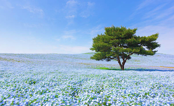 茨城県で人気の出張撮影(出張カメラマン)サービスはこれだ!